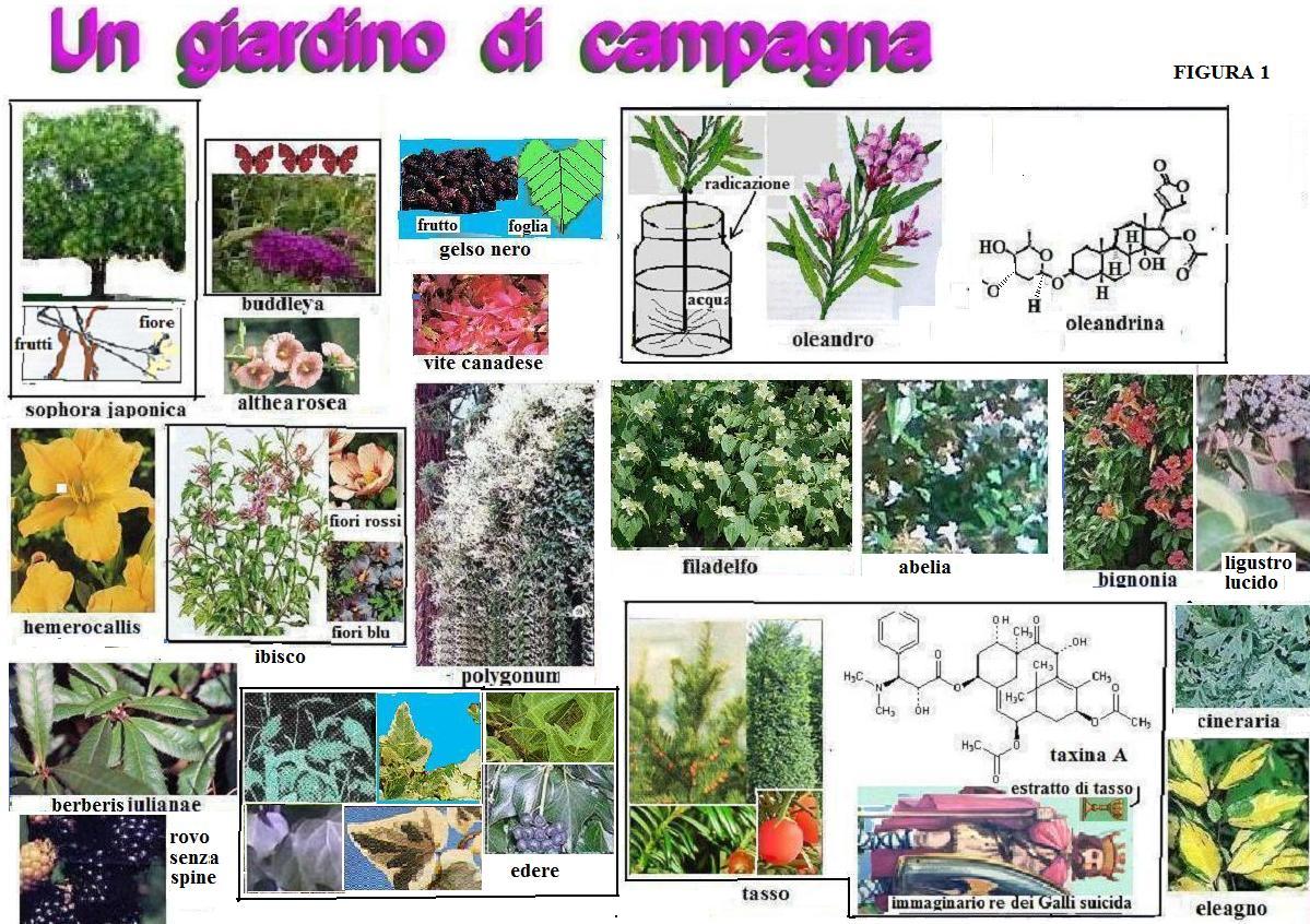 Fare Talee Di Oleandro piante grasse | molecole, che passione!