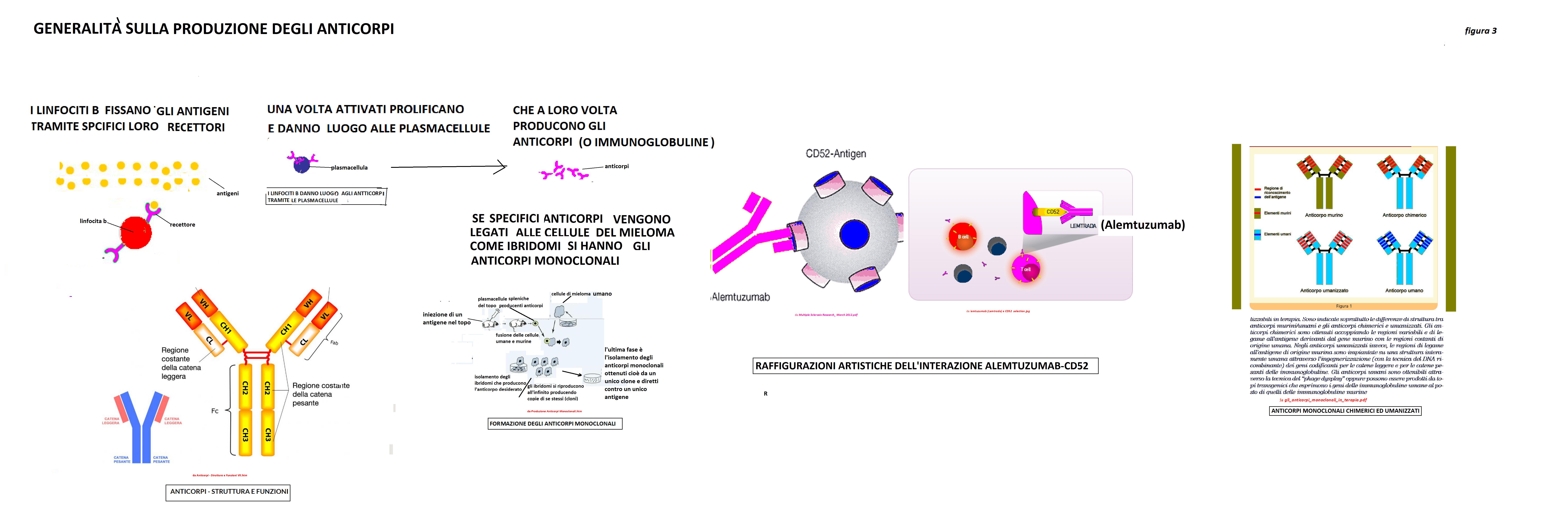 Per quanto riguarda gli anticorpi monoclonali vedere anche il mio articolo la difficile impresa di battere il cancro Per ulteriormente chiarire la loro