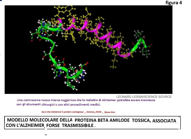 Lo indica la pubblicazione Is the Alzheimer s protein contagious    Science AAAS   News.htm da cui ho tratto la figura 4 (MODELLO MOLECOLARE  DELLA PROTEINA ... 9dcc173bf4fa